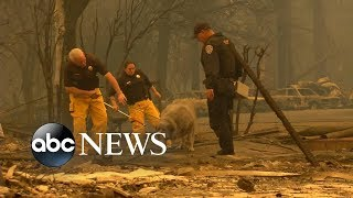 Volunteers in California brave the fires to rescue animals from the flames