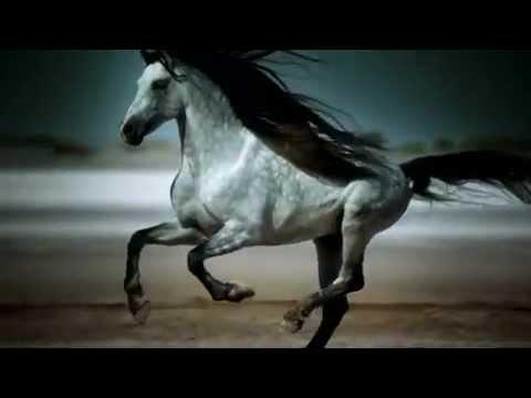 Приключение диких лошадей часть 1. Youtube.