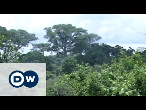 Protecting Ghana's tropical forest | Eco-at-Africa