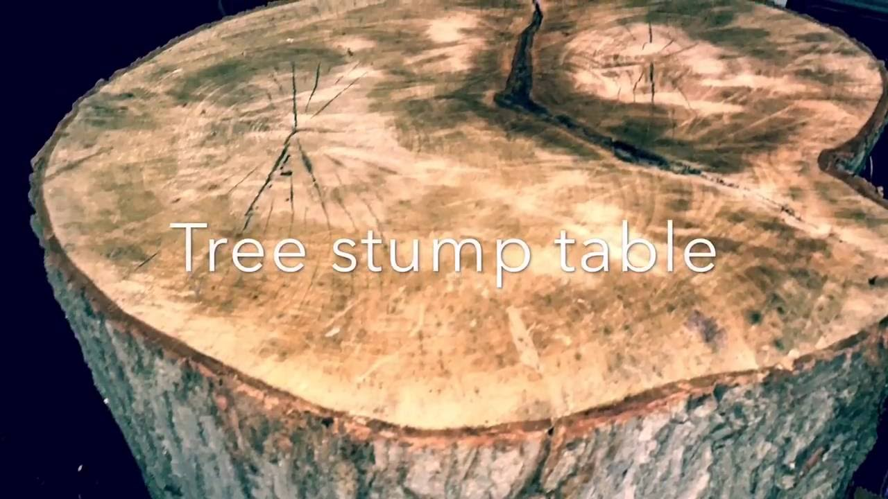 DIY Tree Stump Table, Harvesting And Construction   YouTube