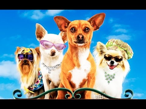 beverly chihuahua un chihuahua en beverly hills trailer espa 241 ol youtube 5962