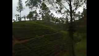 Travel on Train in Sri Lanka - Udarata Manike train going through tea plantation at Hatton area