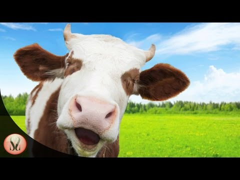 The Cows Are Watching Gameplay |