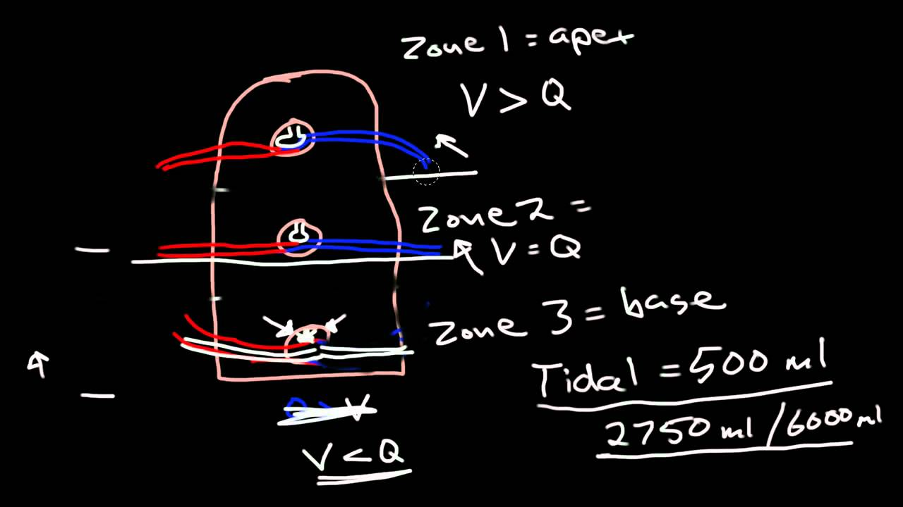 Image result for Distribution and matching of breeze and perfusion