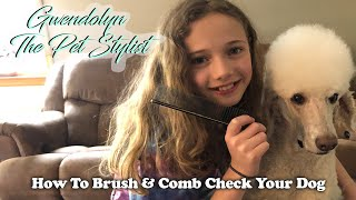 How To Brush & Comb Check Your Dog