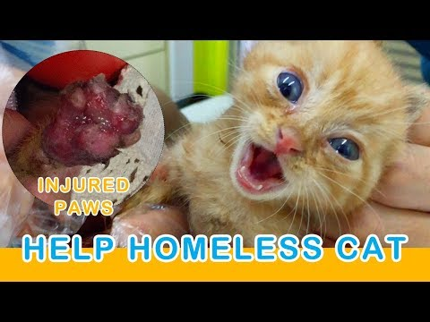 A Homeless Kitten Asking for Help Injured Paws - PAWZ Road