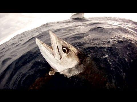 Spearfishing - 20kg Spanish Mackerel