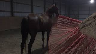 Horses Play in Arena 1 (1/28/2018)