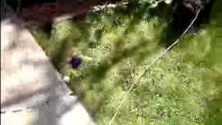 Black Cat Leash Training