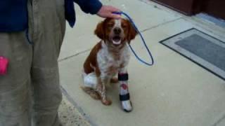 dog brace wow!!!   AOC Pet   Animal Ortho Care