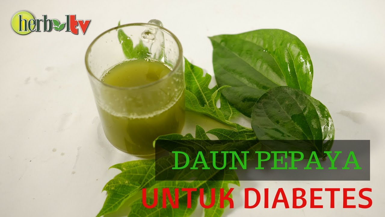 daun pepaya untuk obat diabetes