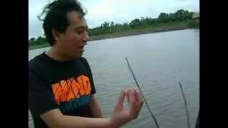 farming - Basa Fish 11