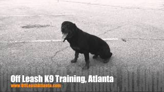 Knowing The Difference Between Commands And Junk! | Rottweiler | Atlanta Dog Trainers