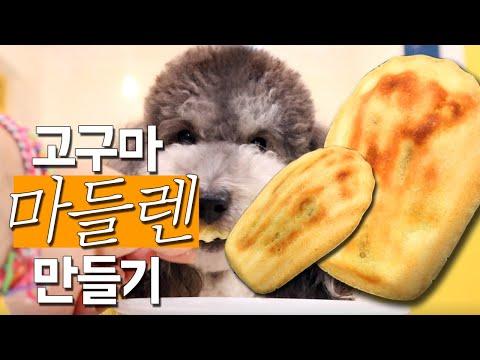 강아지-수제간식-만들기-|-고구마-마들렌-|-강아지-쿠키-|-homemade-dog-bakery-treats
