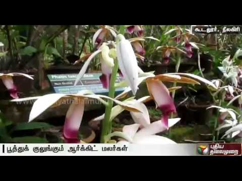Rare orchid flowers