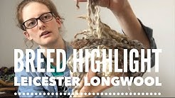 Fiber Breed Highlight: Leicester Longwool