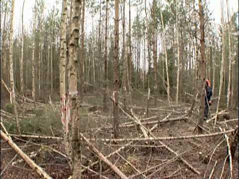 Kraftsamling skog Röjning