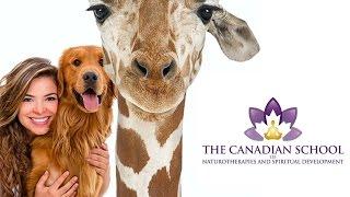 Animal Reiki Practitioner Online Certificate Training