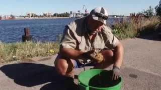 На рибалку з Нормундом : ловля болонської вудкою на каналі #5