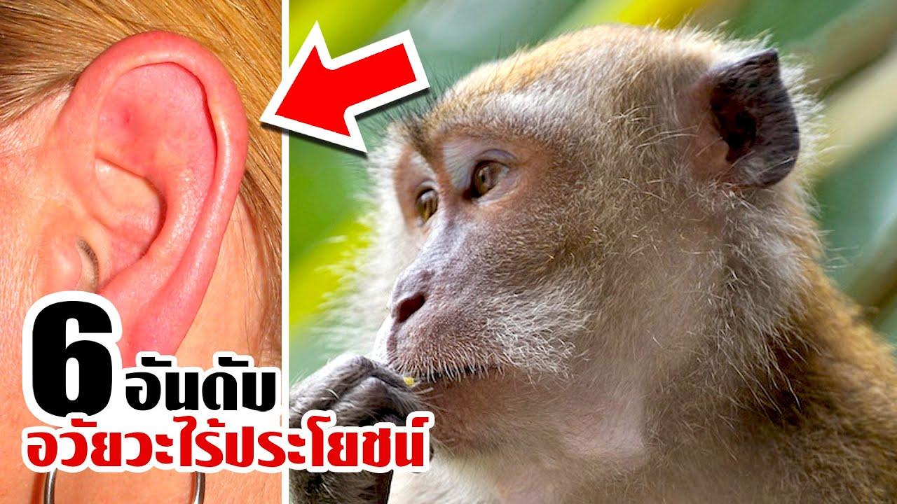 6 ชิ้นส่วนอวัยวะมนุษย์ที่ไร้ประโยชน์..ไม่จำเป็นตัดทิ้งดีกว่า!!