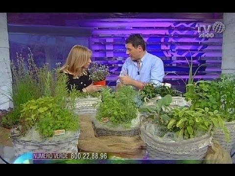 Come coltivare le piante aromatiche sul balcone di casa youtube - Coltivare piante aromatiche in casa ...