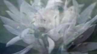 Altissimo - Paolo Spoladore