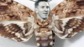 Энтомолог объяснила, почему мотылек сел на глаз Роналду