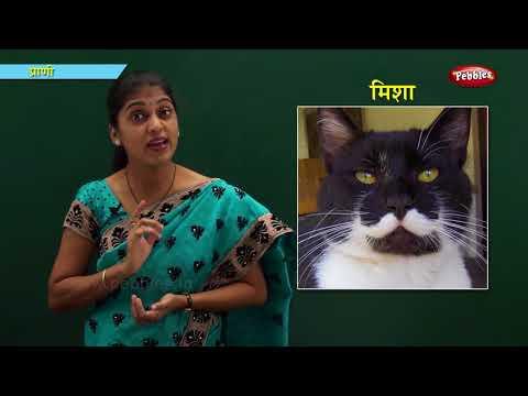 General Knowledge in Marathi | Learn Marathi For Kids | Marathi For Beginners