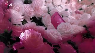 V30+ Малиновая Роза