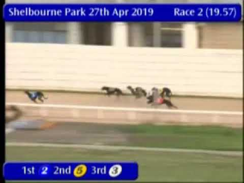 IGB - The Bet On The Tote A2  27/04/2019 Race 2 - Shelbourne Park