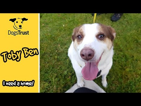 Meet Toby Ben, The Jack Russell Terrier Who Loves People! | Dogs Trust Ballymena
