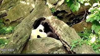 Bei Bei Playing Snz Cam 34 Happy Fun 34 Melodality
