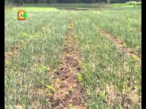 Smart Farm: Garlic Farming