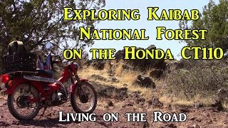 Exploring Kaibab National Forest on Honda CT110 - Living on the Road