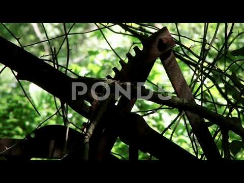Antique Farm Equipment Abandoned In Forest Close Up 1 Stock Footage