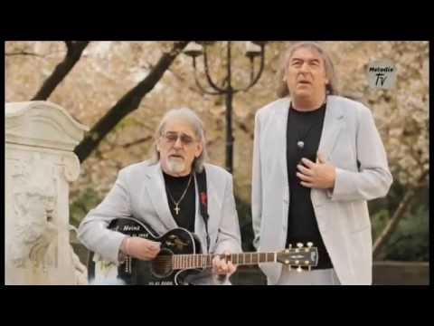 Die Amigos  Weiße Rosen blühen in Athen