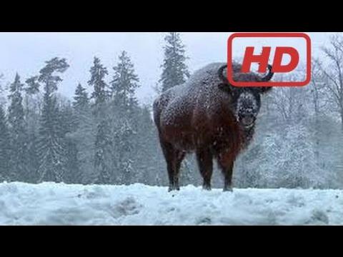 Documentary Wild Poland   Documentary [Hd]