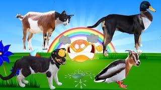 suara hewan untuk balita | suara hewan video | Tokek