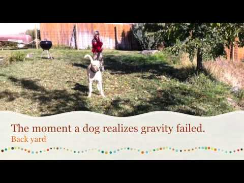 Dogs know when gravity fails them.