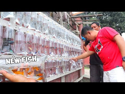 CHEAPEST AQUARIUM FISH SELLER ON THE STREET ** I Bought New Fish**