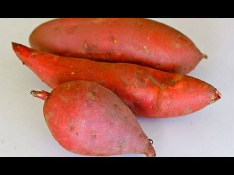 Sweet Potato 101