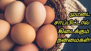 Benefits of Eating Eggs in Tamil  Weight Loss  Memory Power  Healthy Life   Tamil