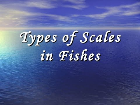 Scales Of Fishes