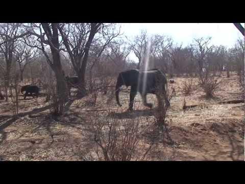 Botswana Chobe National Park Zuidelijk Afrika deel 16