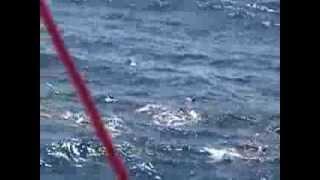 Freddy Solorzano  Pesca de Atún abordo del B/A VIA SIMOUN