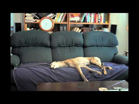 Greyhound Couch Time Lapse