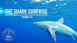 Video The Shark Surprise - Ep. 110 RAN Sailing download MP3, 3GP, MP4, WEBM, AVI, FLV Juli 2018