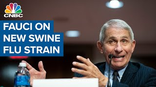 Dr. Anthony Fauci: New virus in China has traits of 2009 swine flu and 1918 pandemic flu