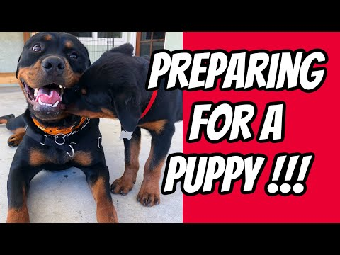 Preparing for a Rottweiler Puppy TIPS