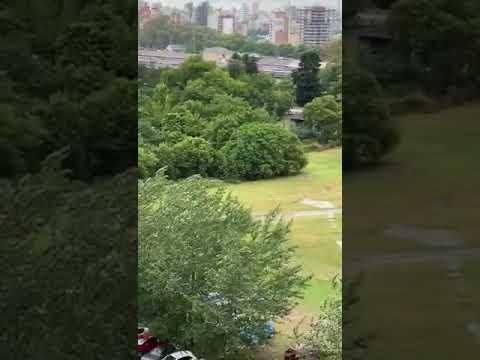 Apareció otro video del conductor que causó estragos en Puerto Norte